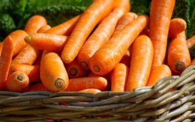 Karottenöl fürs Gesicht – 5 Gründe, warum es mich begeistert